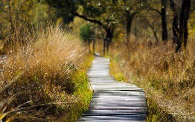 Comment réagir face au burn-out ou à la dépression?